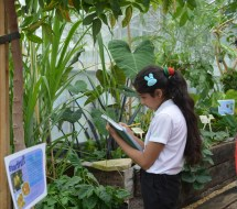 Careful artwork in progress - the star fruit was a star attraction.