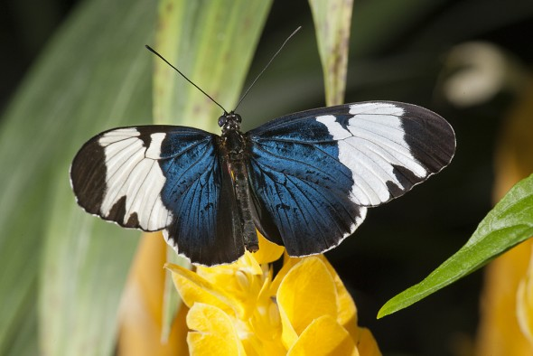 19 Fascinating Butterfly Facts
