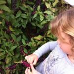 Ωπ! Τί ωραίο φυτό! Βαφει κιόλας! Ανακαλύψαμε φυσική βαφή!!!