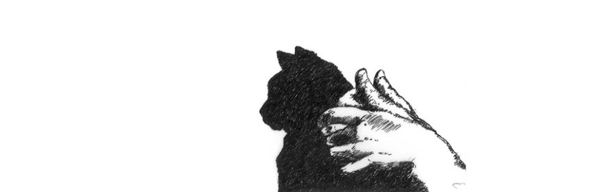 Cat Shadow Puppet – one of the specially commissioned images for the performance (Beware the Cat, Festival of the Mind) by Penny McCarthy