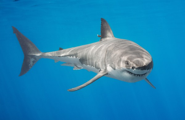 Skype in the Classroom learns the truth about sharks