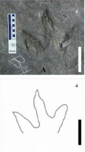 "One of the theropod footprints from ""Trackway B"". From the Palaeogeography, Palaeoclimatology, Palaeoecology paper."