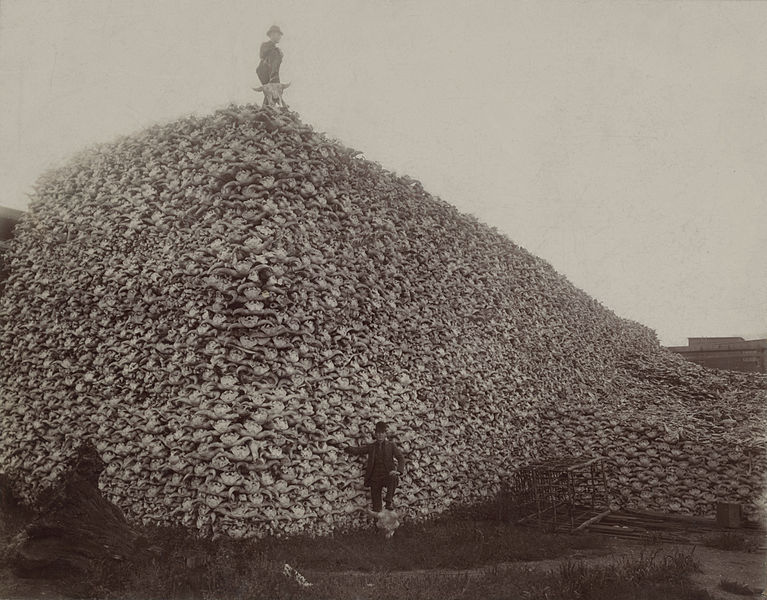 Image result for half a million buffalo in a photo