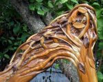 Rivendell Harp by Glenn Hill