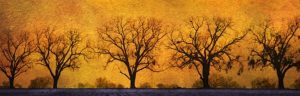 Ashland Gallery Association Featured Gallery Exhibits January 2017 - 'The Guardians' photograph by John Kirk