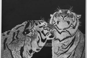 Tigers scratchboard art by Lara Strazdas