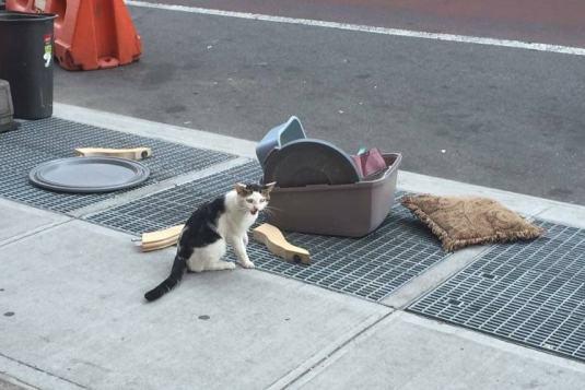 gato-abandonado-en-calle-con-cesta-pertenencias