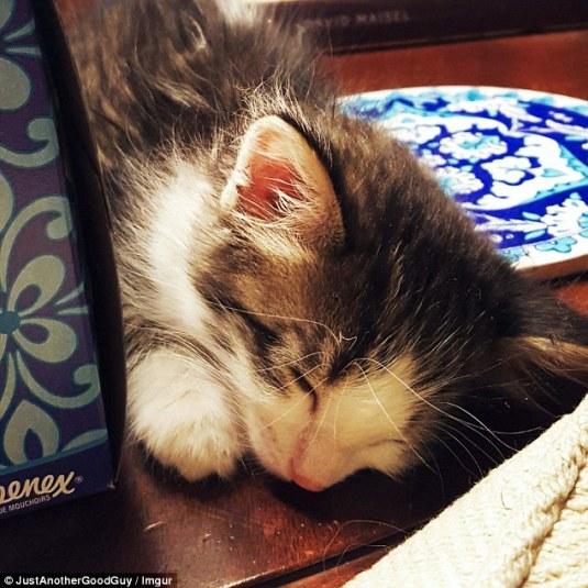 gatito-asustado-rescatado-reddit-2