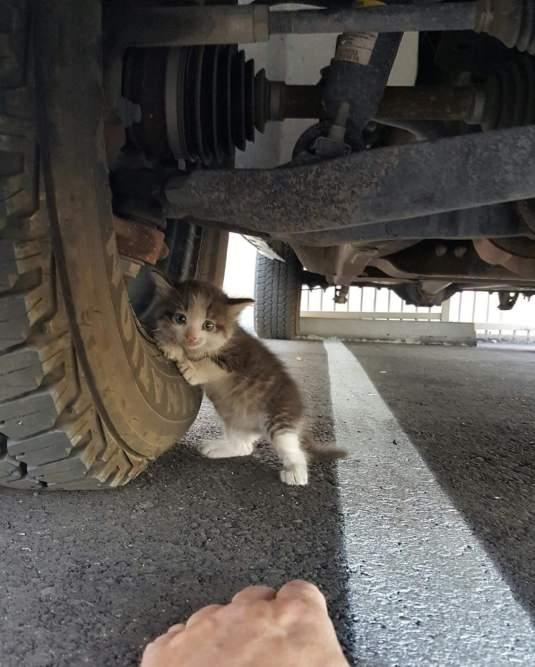 gatito-asustado-rescatado-reddit
