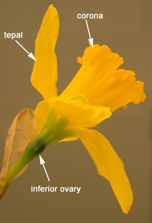 Floral Variation | Biology 343