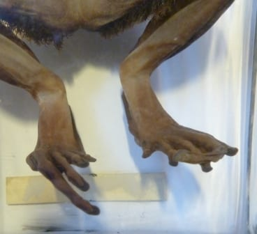 Specimen Of The Week Week 119 UCL Museums Amp Collections