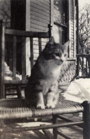Cat, undated [circa 1913-1942]
