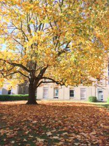 Autumn tree on campus