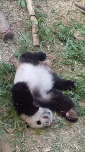 Lazy Panda in the Singapore Tour
