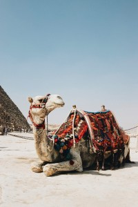 kids friendly travel destination giza