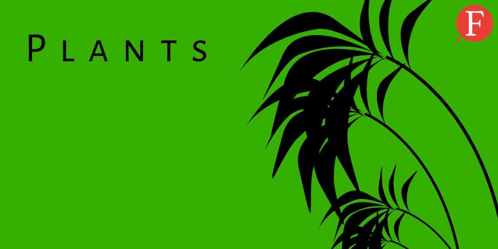1-Plants-plain
