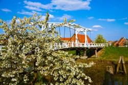 Hogendiekbrücke_Blüte 001