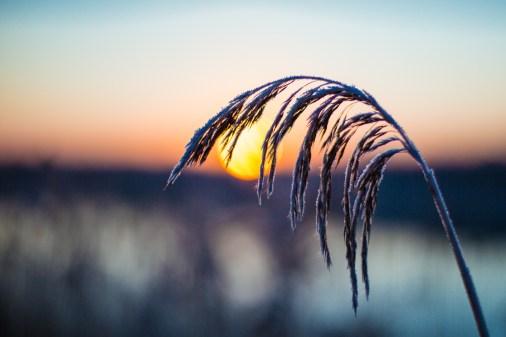 frozen-077