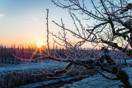 frozen-108