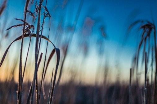 frozen-116