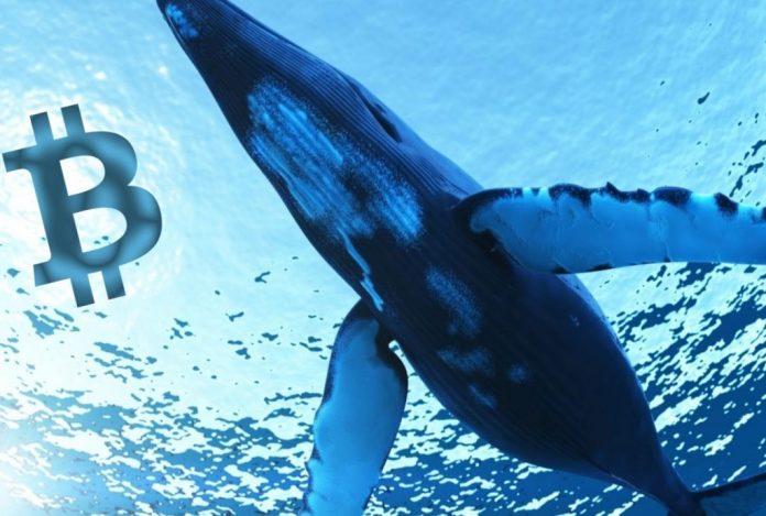 siêu cá voi bitcoin sở hữu 80000 btc