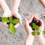 Mains qui tiennent des plantes à mettre en terre