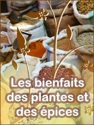 Bienfaits des plantes et des épices