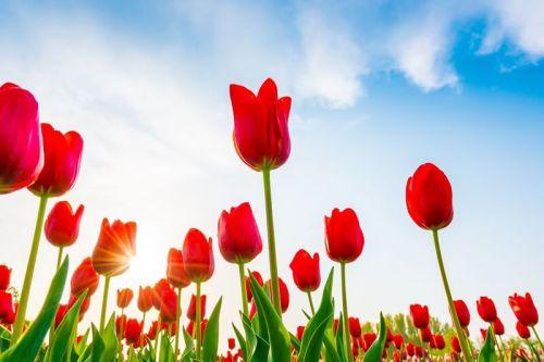 activite paques printemps