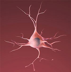 Neuronul pe cacao - pare relaxat, nu?