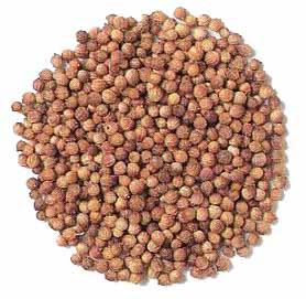 coriander20seeds1