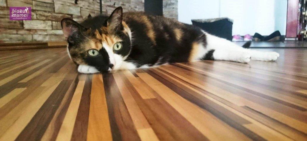 kyra pisica grasa