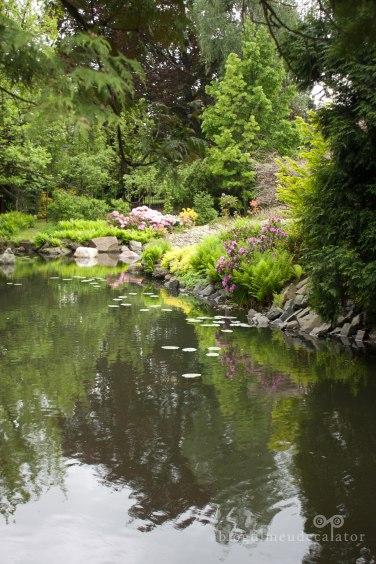 lac si flori