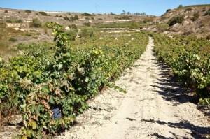 Exopto vines, chulato