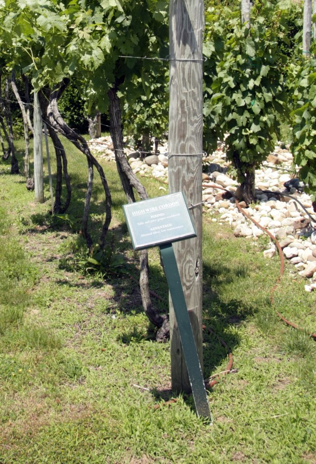 Wolffer trellises, Hi-wire cordon