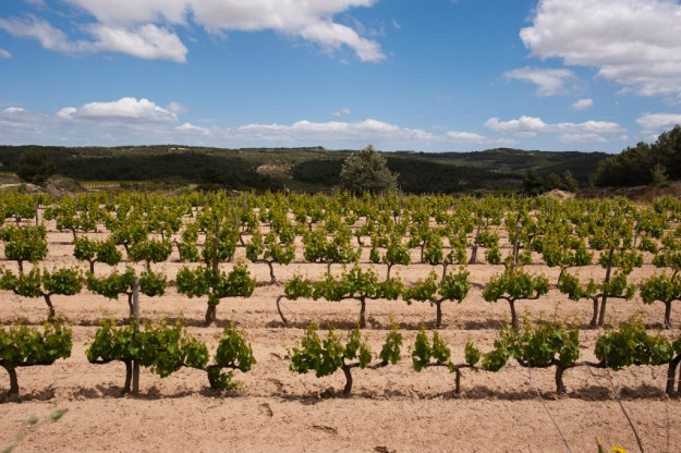 Pinol, Portal Tinto vineyard