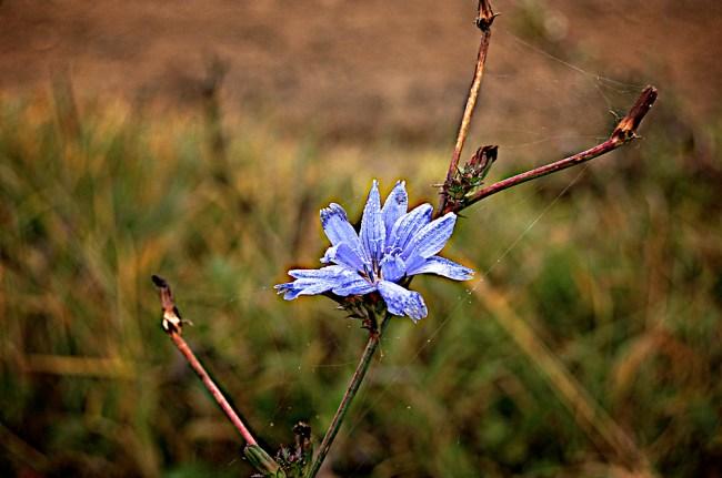 Flower on autumn field