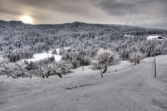 Snow on Verditz trees