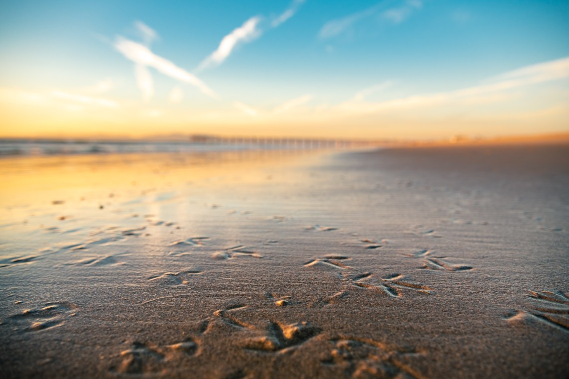 Seagulls footprints