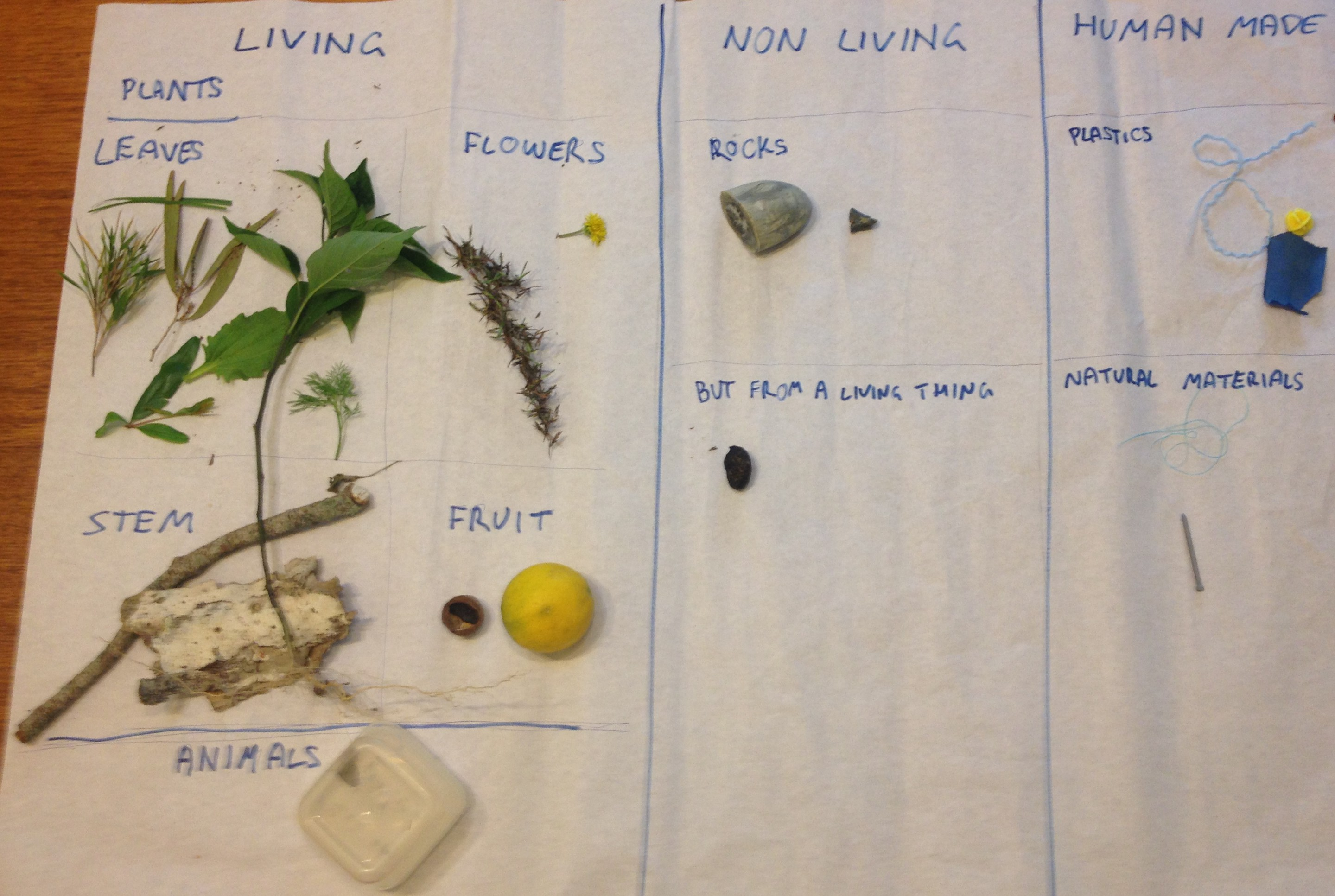 Classifying Living Things Worksheet