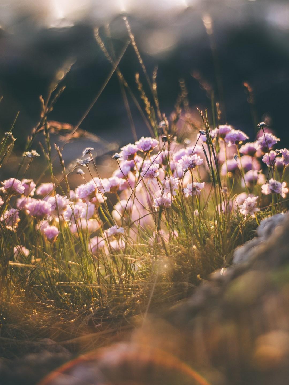 blomsterklippa