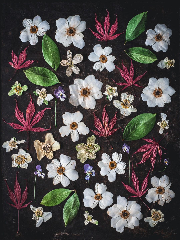 blomsterpill torkade blommor