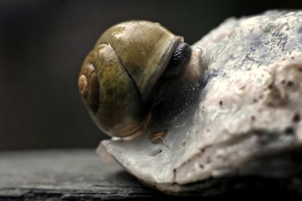 Blomsterphoto Gastropoda Soli 2013