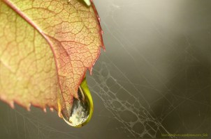 blomsterphoto-drop-the-time-soli-2016