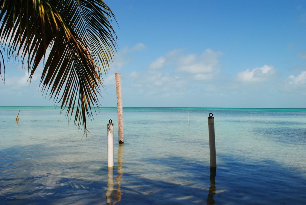 Belize: From reef to rainforest