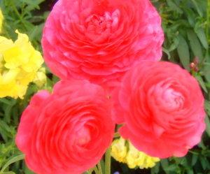 Spring_flowers_074_2