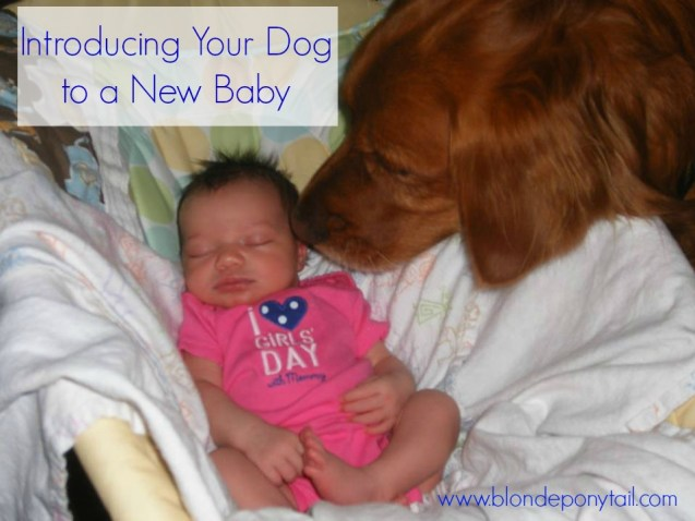 Introducing Your Dog to Baby.jpg