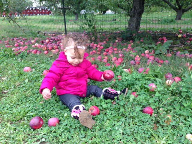 Curtis Orchard apples