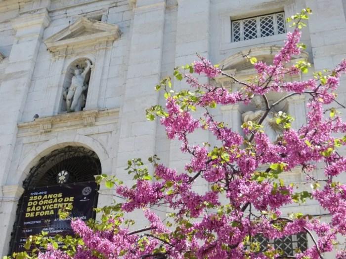 Flowers in Lisbon.