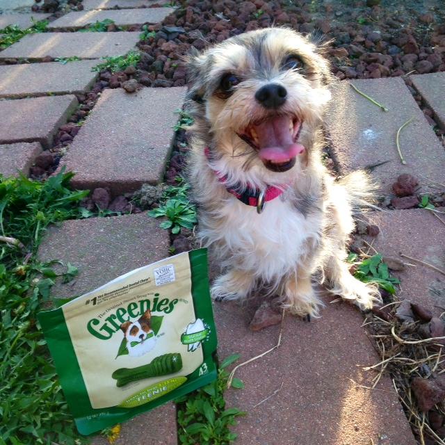 Image Result For Dog Nutritional