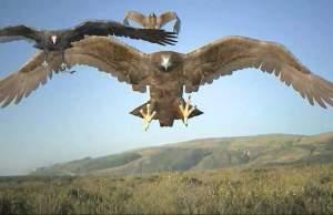 Birdemic Bad